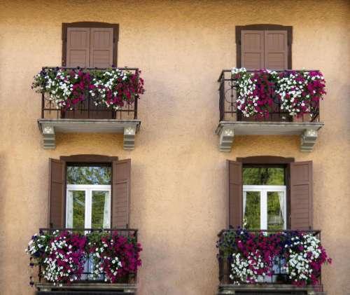 windows window boxes flowers pink white