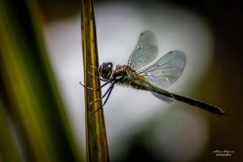 Life animal insect dragonfly wings