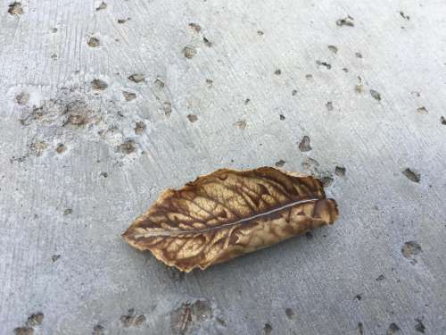 fallen leaf leaves pavement sidewalk