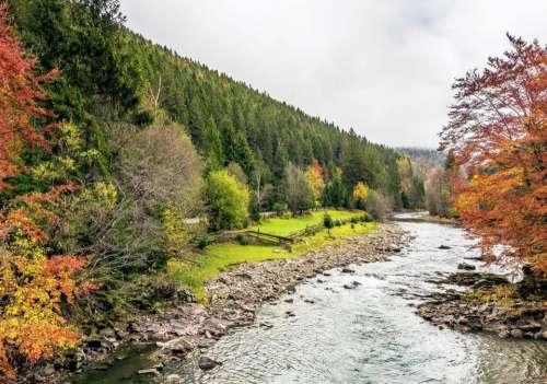 river forest mountain foliage autumn
