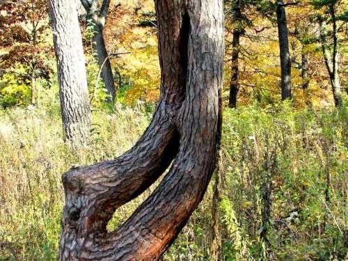 #autumn2017 tree autumn forest tree