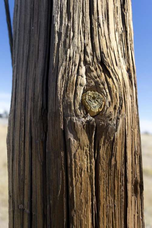 texture pole electric pole wood