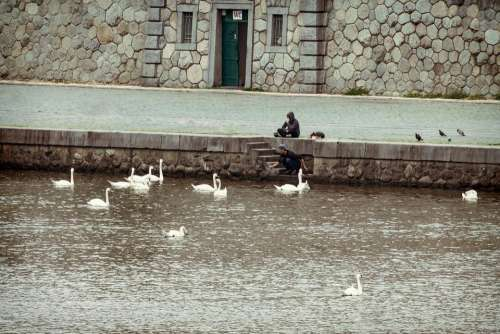 vintage swan river prague water