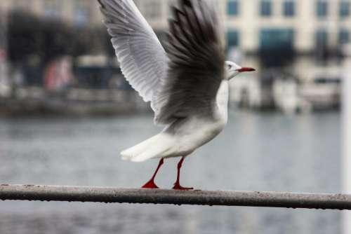 nature animal bird waterfowl gull