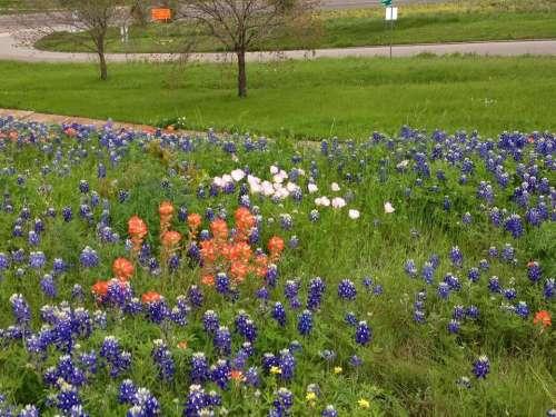 Field of wildflowers wild flower flowers floral garden