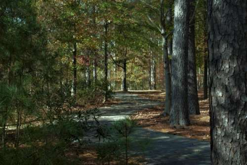 Path tree leaves park autumn