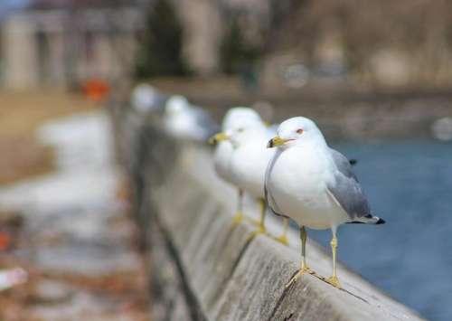 nature birds wildlife outdoors water