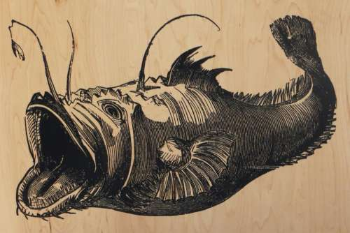 anglerfish fish deep sea deep-sea fish sea life