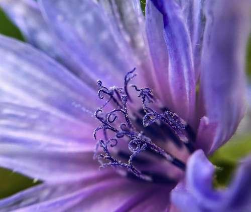 flower purple flower floral garden
