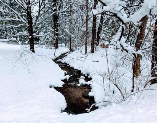 Creek snowfall snow trees nature