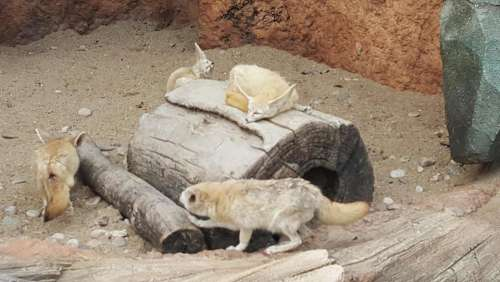 zoo Seoul animals fox