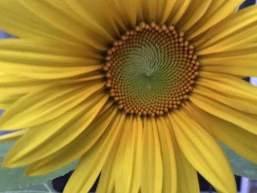 Flower floral pollen garden