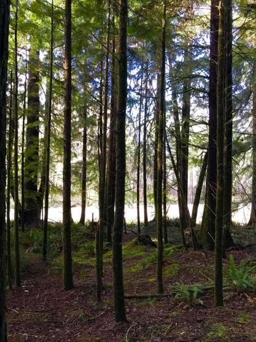 Trees fosest glen woods