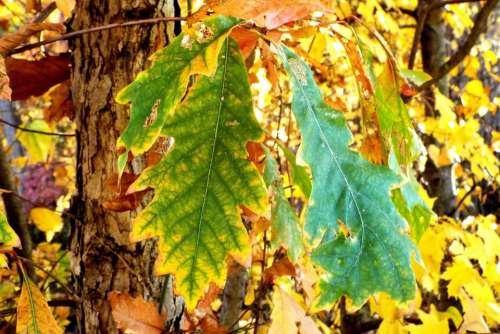Autumn foliage leaves leaf tree