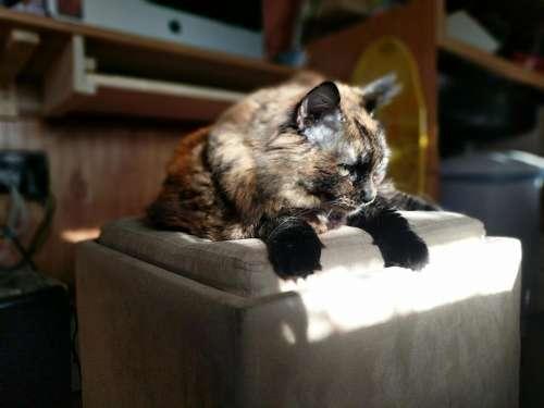 cat feline pet animal domesticated