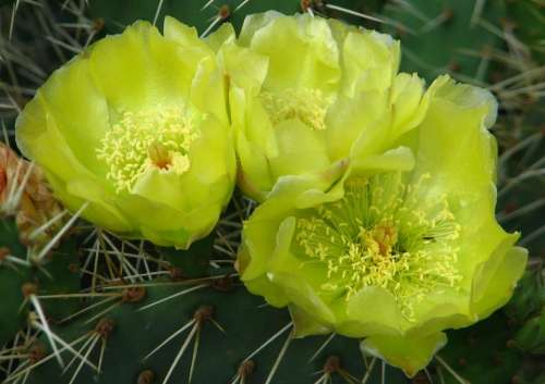 cactus green flower plant nature