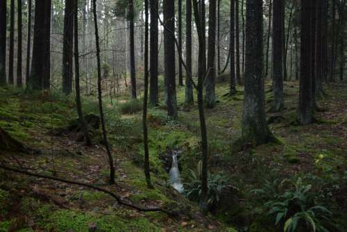 landscape treescape forest wood woodland