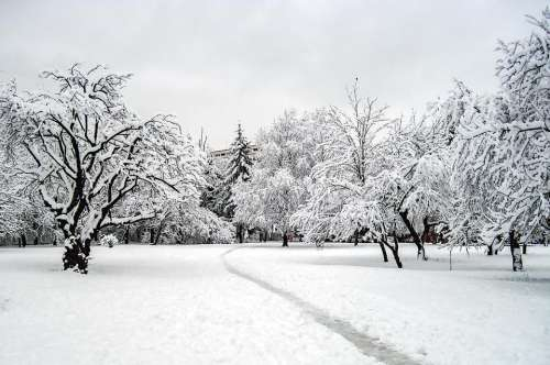 winter snow trees nature path