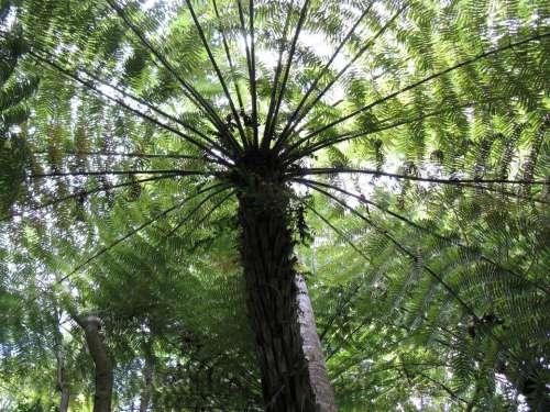 Palms Palm tree nature design tropical