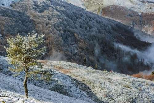 solitary tree mountain snow high