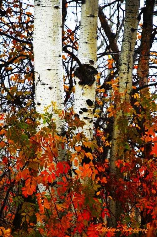 Autumn fall foliage leaves