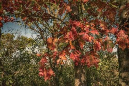 forest tree leaves leaf autumn