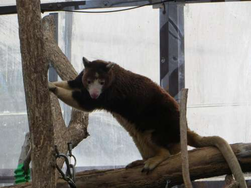 animal zoo tree climber