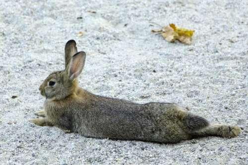 rabbit mammal bunny cute animal