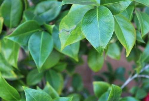 drip droplet plant leaf leaves