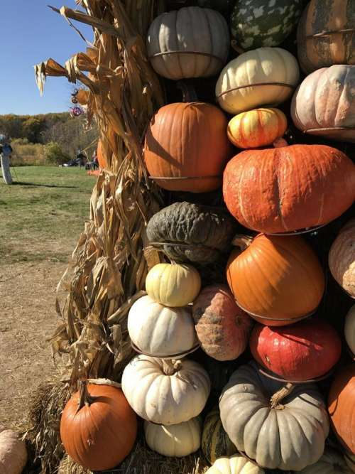 gourd gourds autumn pumpkin