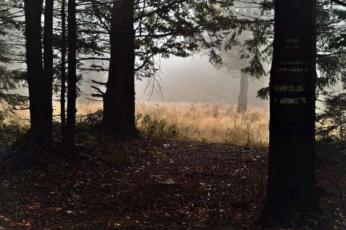 fabulous magically forest autumn fog
