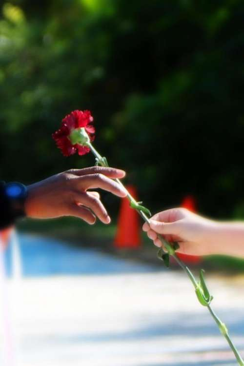 African American flower red passing hand