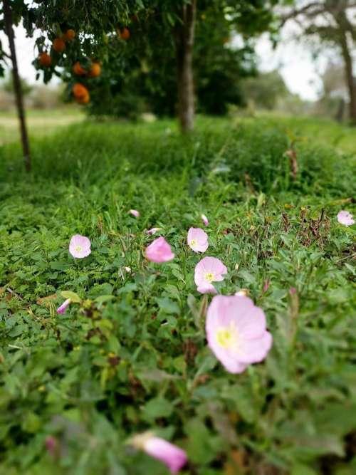 Plants plant garden flowers #flower-cluster
