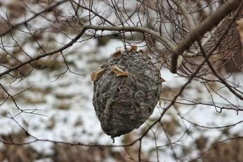 nature outdoors wildlife winter season