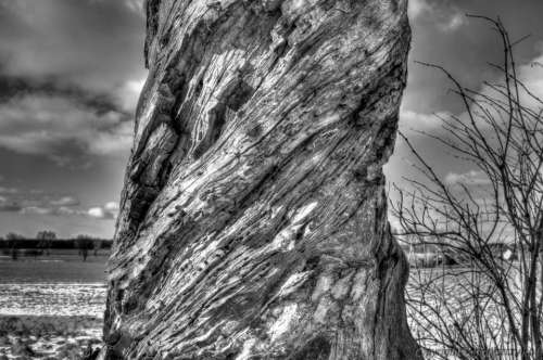 Tree dry winter