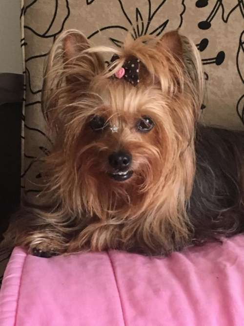 dog canine pet animal domesticated