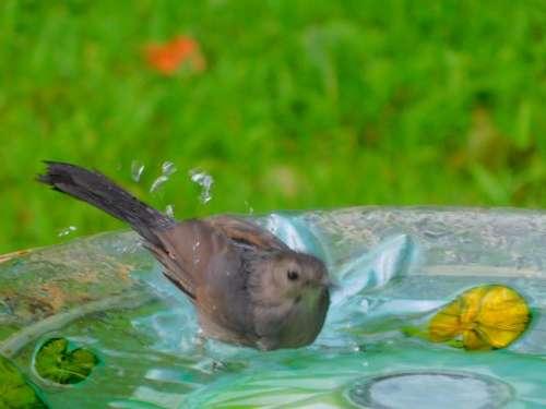 Bird birdbath
