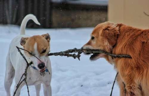 winter snow dog pet pets