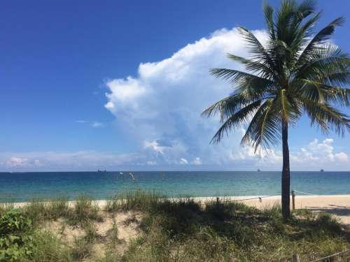 Cloud beach seashore tropical Palm tree