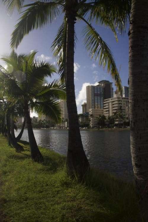 Palm Trees Hawaii Waikiki Oahu Aloha