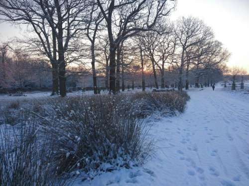 snow winter sunrise London nature
