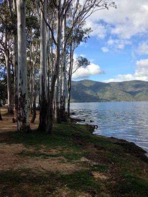 Tree trees mountains lake water