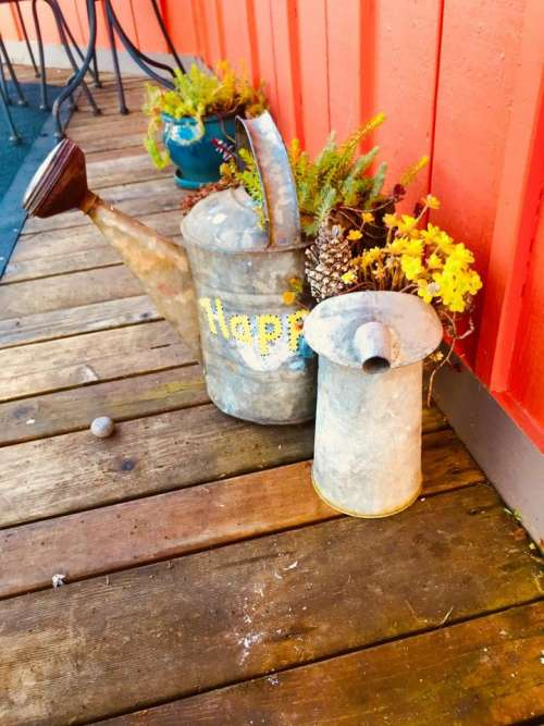 flowers display watering can garden