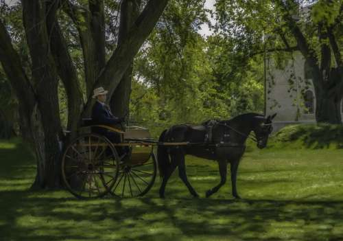 horse carriage buggy country vinatge