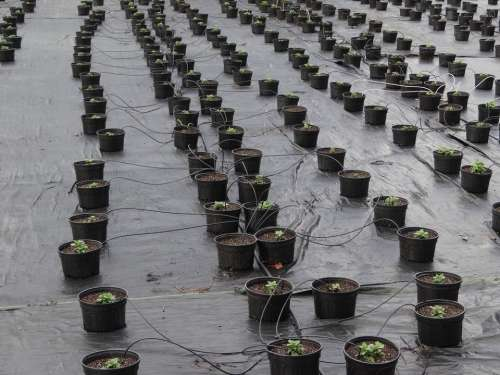 plants nursery irrigation flower pot hoses