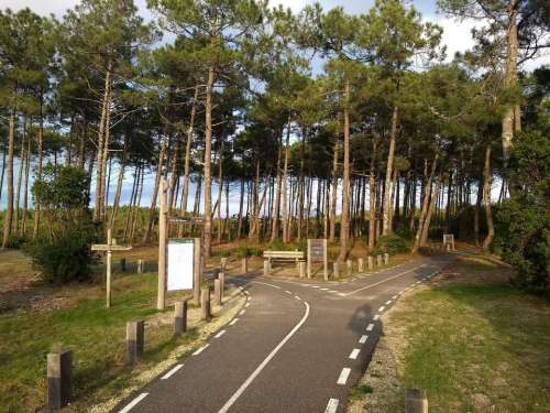 Cycle path junction forest tourism sport