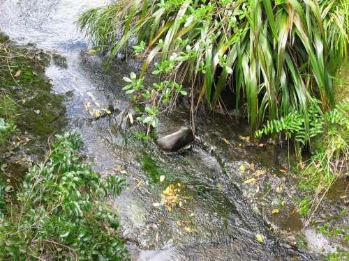 Creek New Zealand water nature