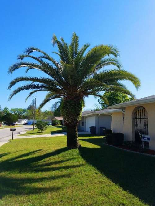 palm tree fronds Florida