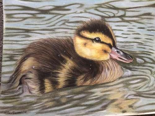Duckling duck waterfowl water bird nature