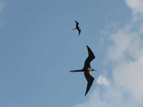 bird sea ocean albatros fly